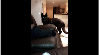 Owner Scares Pooch But Dog Gets Sweet Revenge - Video