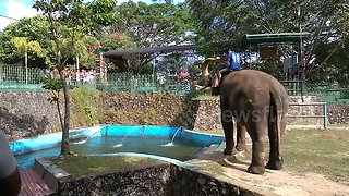 Hilarious Elephant Giggles While Spraying Zoo Guests