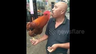 Chinese man feeds pet rooster by mouth - Video