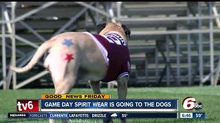 Man is making game day spirit wear for dogs - Video