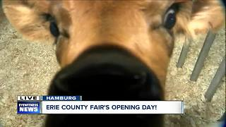 Visiting the moo-ternity ward at the Erie County Fair! - Video