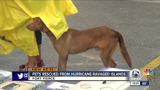 Big Dog Ranch helps rescue pets from hurricane-ravaged Caribbean islands - Video