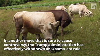 Trump Obliterates Obama-Era Rule... Sends Clear Message to PETA - Video
