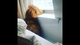 Dog takes neighbourhood watch duties extremely seriously