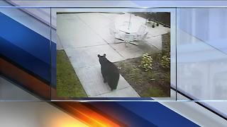 Bear spotted on Florida campus - Video