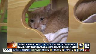 Rabies alert issued in Cecil County community