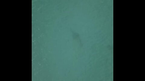 Drone captures images of marine life at Fort Pierce Inlet