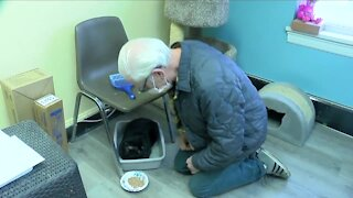 Homeless veteran & Ten Lives Club help injured cat
