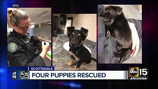 Puppies rescued in Scottsdale after animal cruelty bust - Video