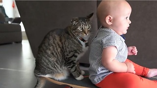 Baby and cat enjoy precious skateboard ride together - Video