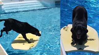 Surf's pup! – Adorable pup body boards to retrieve her toys   - Video