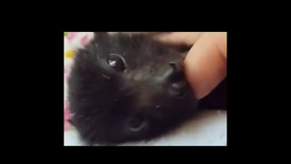 Baby Bat Enjoys a Bath During Intense Summer Heat - Video