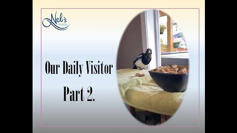 Our Daily Visitor - Part 2
