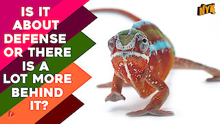 How do Chameleons Change Their Colour ?