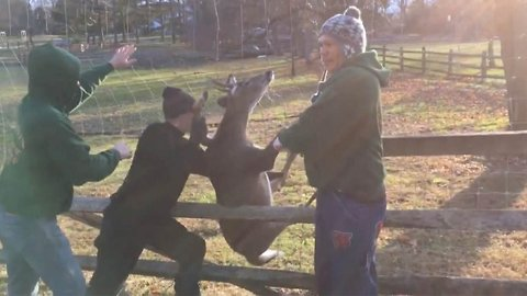 Doting man frees distressed deer after antlers got stuck in fence