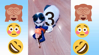 realy funny dog and cat. VIDEO 3