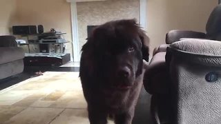 Dog lets loose after permission to bark - Video