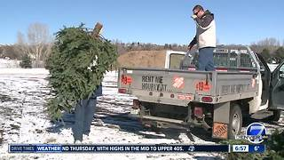 Where to recycle your Christmas tree - Video
