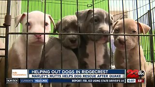 Hello humankindness: Helpinng out homeless pets in Ridgecrest