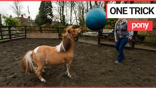 Pony becomes obsessed with playing FOOTBALL