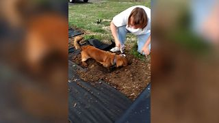 Dog Has A Green Thumb - Video