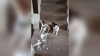 Guilty Dogs Can't Face The Truth - Video
