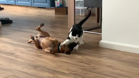 Puppy and kitty wrestling match will definitely brighten your day