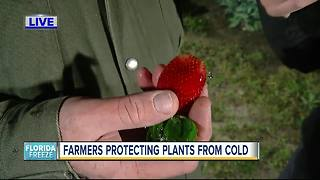 Farmers protecting plants from cold - Video