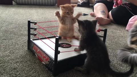 The Cutest Wrestling Match You'll Ever See