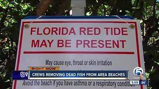 PBC removing dead fish from beaches