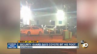 Security guard says coyote bit his foot - Video