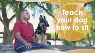 Teach your dog how to sit - Video