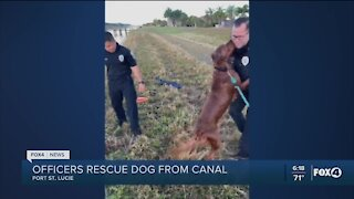 Dog rescued from canal