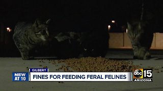 Gilbert ordinance banning feeding feral cats met with resistance