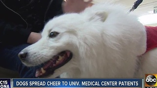 Dogs spreading holiday cheer to medical centers - Video
