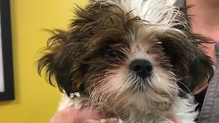 Humane Society warns of potentially deadly virus - Video