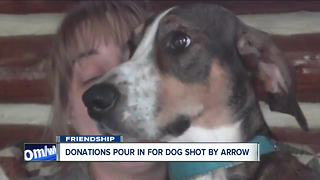 Police: Man shot neighbor's dog with arrow - Video