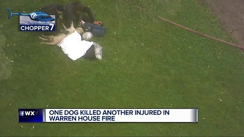 1 dog dead, another seriously injured in Warren house fire
