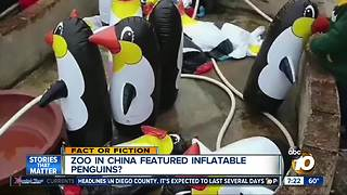 Zoo features inflatable animals? - Video