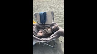 You'll never be as relaxed as this dog is lounging at the beach