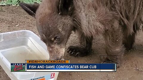 Fish and Game confiscates bear