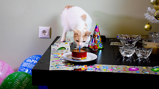 Cat blows out his birthday candle
