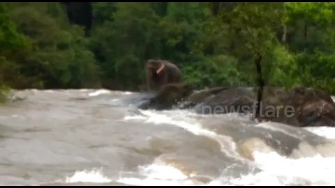 Elephant stranded in overflowing river is saved by Indian forest officials