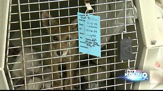 Tucson Wildlife Center inundated with animals due to heat - Video