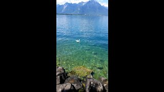 Green lake in Switzerland with white bird