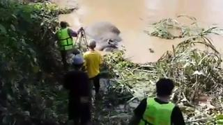Elephant rescued after spending 24 hours stuck in river - Video