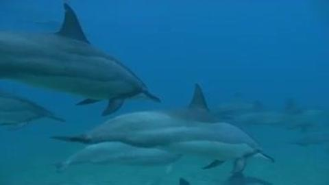 Dolphins - Test