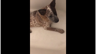 Puppy Asked To Leave Bathtub Throws Temper Tantrum