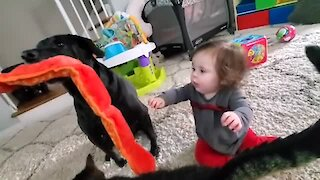 Selfish doggy refuses to share toy with baby best friend