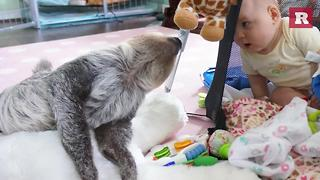 Baby and Sloth make adorable BFFs | Rare Life - Video
